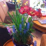 Spring flowers in lobby