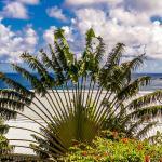 Arbre du voyageur et vue mer Résidence Océane Martinique Tartane