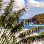 La vue et l'arbre du voyageur Résidence Océane Martinique Tartane