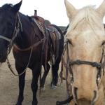 Great horses to ride