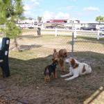Dog friendly - three fenced areas so your dog can meet friends