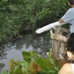 guests filming  our caiman, turttles and birds.