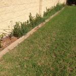 Weeds & poor ground maintenance everywhere.