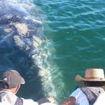 baleine en approche
