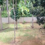 Tropical Tree Villa Galle Foto