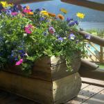 Flower Boxes at Grand Lake Lodge