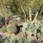 Foto de Canyon Ranch in Tucson