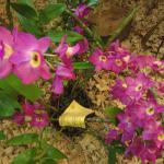 increíbles Orquideas y más orquideas