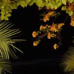 Blick von Abendessen in die samtige tropische Nacht