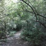 The beginning of nature trail