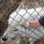 Foto de Howlers Inn Bed & Breakfast and Wolf Sanctuary