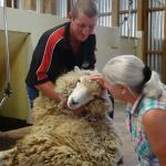 Stroking the sheep (before it's sheared)