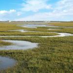Seal Beach National Wildlife Refuge - Tidal Salt Marsh