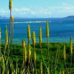 overlooking a protected bay, Aloe Vera flowers border the property gardens