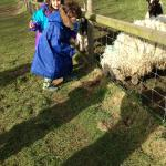FEEDING THE SHEEP AND GOATS