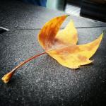 Leaf at Cedrics