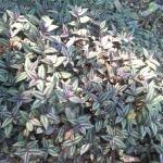 Área de plantas ornamentales con hojas rojizas y verdosas.