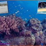 Dive Kupang Dive