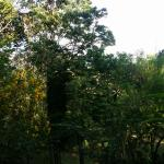 whole surrounding garden