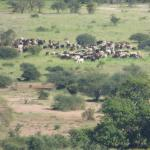 Cattle in the valley below