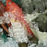Selection of Fresh Seafood