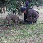 Week-end truffe