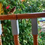 Lugar lindo café da manhã ao lado da natureza... Com pássaros passeando lado a lado... Perfeit