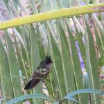 Hummoing bird in grounds