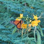 Butterfly in grounds