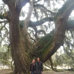 All About Savannah Tours Foto