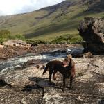 Tess cooling off - River Etive.