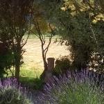 Woodside hayfields