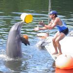 Delfinarium in Varadero, Cuba