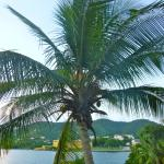 Coconut Palm outside my Room. View to Fort Christianvern