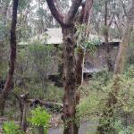 lodge in the bush