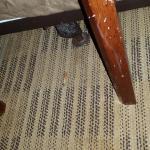 cigarette bud near the bed in a non-smoker room