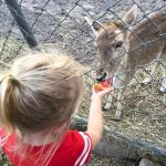 Feeding a baby deer
