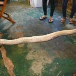 Snake for drink