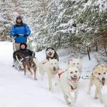 Dog sled picture from March 2014. Costs extra but worth it!