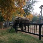 Elephant at Lee Richardson Zoo, Garden City, Kansas