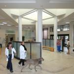Veterinary Teaching Hospital Lobby