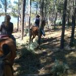 Porter mountain stables