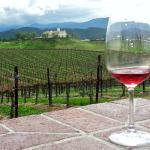 Wine Tasting at Leoness Cellars