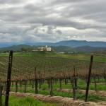 Vineyards at Leoness Cellars