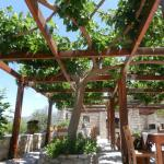 mulberry tree over the dining area