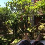 Foto de Citrus Tree Villa - Darta