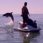 Dolphin Adventure Tour!
