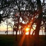 Sunrise through the Live Oak trees