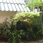 Photo de Baantonsai Garden Resort