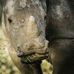 Baby white rhino we had sundowners near
